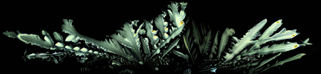 Crystaline Feathers